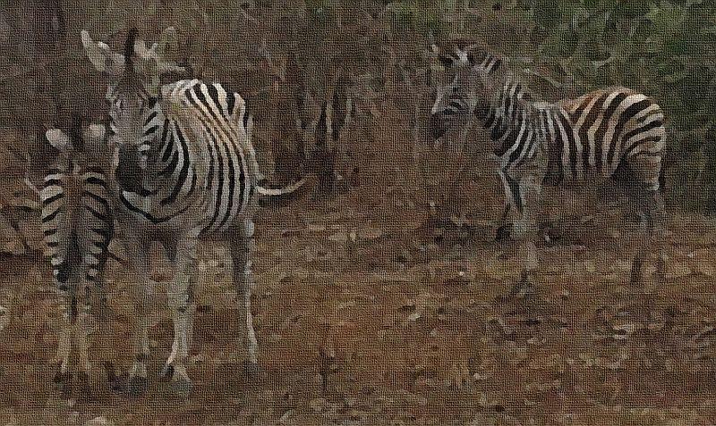 Three generations of Zebra...